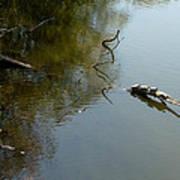 Turtles On The Pond Art Print