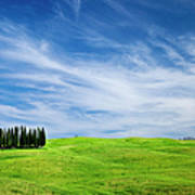 Tuscany Cypress Art Print