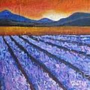 Tuscany Lavender Field Art Print