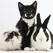 Tuxedo Kitten With Black Dutch Rabbit Art Print