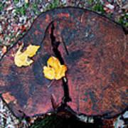 Twin Fallen Leaves Art Print