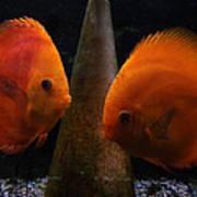 Twin Friends Malboro Fish  Art Print