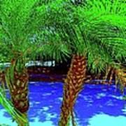 Twin Palms 2 Art Print