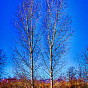 Twin Trees At South Platte Park Art Print