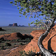 Twisted Tree Monument Valley Art Print