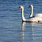 Two Beautiful Swans Art Print by Sabrina L Ryan
