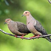 Two Doves Art Print