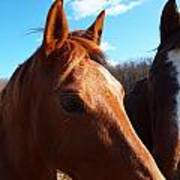 Two Horses In Love Art Print