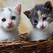 Two Kittens In Basket Art Print by Garry Gay