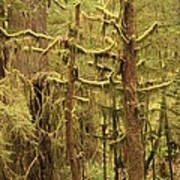Waltzing In The Rainforest Art Print