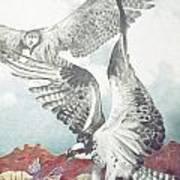 Two Ospreys Art Print