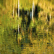 Two Palms Reflected In Water Art Print by Rich Franco