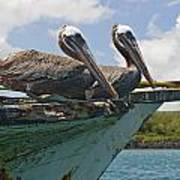 Two Pelicans Pelecanus Occidentalis On Art Print
