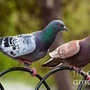 Two Pigeons Art Print