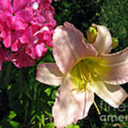 Two Pink Neighbors- Lily And Phlox Art Print