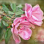 Two Pink Roses II Blank Greeting Card Art Print
