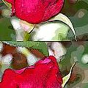 Two Rose Buds Art Print