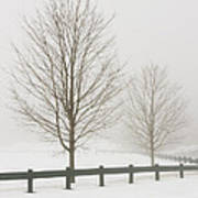 Two Trees And Fence In Winter Fog Art Print