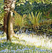 Sunlit Bluebells Llanina Ceredigion Art Print
