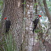 Two Woodpeckers Art Print