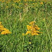 Two Yellow Wildflowers Art Print