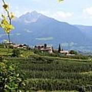 Tyrolean Alps And Vineyard Art Print