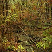 Unami Creek Feeder Stream In Autumn - Green Lane Pa Art Print