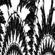 Undefined Black Lace Art Print