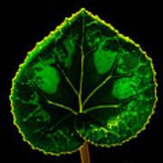 Under Leaf Art Print