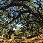 Under The Oak Canopy Art Print