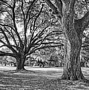 Under The Oaks Art Print