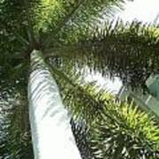 Under The Palm Art Print