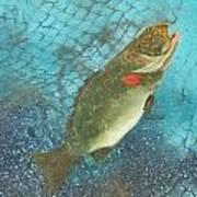 Underwater Grouper Art Print