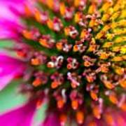 Up Close With A Cone Flower Art Print
