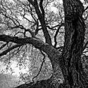Up Tree Art Print