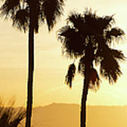 Usa, California, Palm Springs, Palm Trees Silhouetted At Sunset Art Print