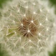 Usa, Pennsylvania, Close-up View Of Dandelion Art Print