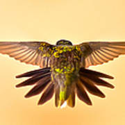 Usaf Hummingbirds Wings Art Print