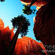 Utah - Navajo Loop 4 Art Print by Terry Elniski