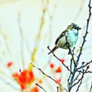 Valentine Sparrow  Art Print