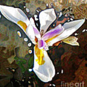 Venice Iris Art Print