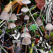 Very Tull Mushrooms Art Print