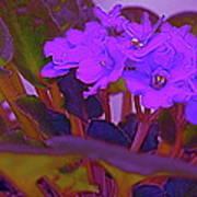 Very Violets  Art Print