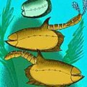 Vetulicola Species II Art Print