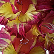 Vibrant Gladiolus Art Print by Susan Herber