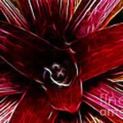 Vibrant Succulent  Macro Art Print