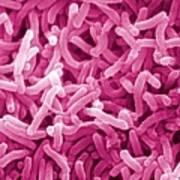 Vibrio Cholerae Art Print