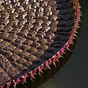 Victoria Amazonica Leaf Vertical Art Print