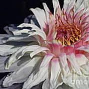 Victoria Water Lily Art Print