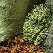 Vietnamese Mossy Frog Art Print